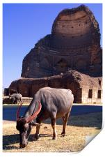 Buffalo Grazing by Bahamani Tombs at Ashtur, Print