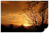 SNOW GEESE AT SUNSET, Print