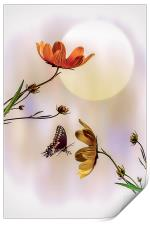 Natures Gifts, Print