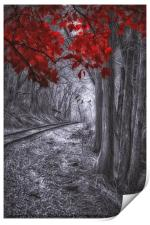 Tracks Through The Forest, Print