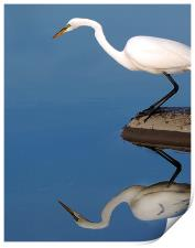 Mirrored Egret, Print