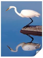 Egret For Mike, Print