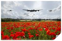 Poppy Fly Past, Print
