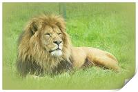 Wallace the Lionheart, Print