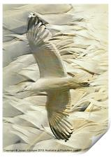 Feathers on Feathers, Print
