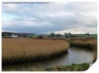 Reed Beds beside the River Condor., Print