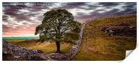 Sycamore Gap - Iconic Northumbria, Print