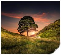 The Sycamore Gap, Print