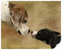 Nose To Nose Dogs, Print