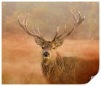 Red Deer Stag , Print