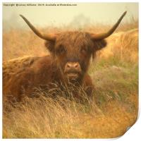Smiling Highland Cow, Print