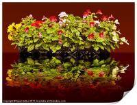 Flowers Reflections, Print