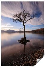 Lone tree in water, Print