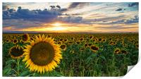 Sunflowers Of Golden Hour, Print