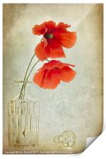 Two Poppies in a Glass Vase, Print