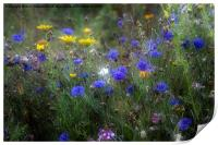 Wild Flowers in France, Print