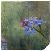 Forget-Me-Not, Print