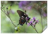 Butterfly, Buds and Petals, Print