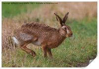 March Hare, Print