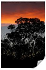 River Murray Trees at Sunset, Print