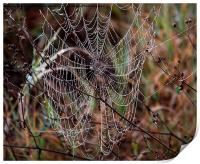 Spider Web with Water Doplets on a Foggy Morning, Print