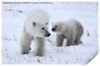 Polar Bear & Her Cub, Churchill, Canada, Print