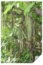 Rain Forest - Patterns in Nature, Print
