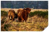 Highland cow and her calf, Print