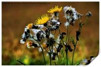 Ragwort Life Cycle with artistic filter, Print