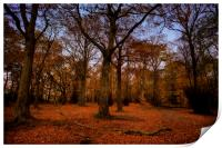 Autumn Woodland, Print