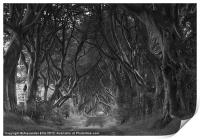 The Dark Hedges, Print