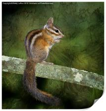 Chipmunk in the Woods, Print