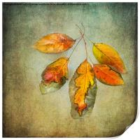 Five Autumn Leaves, Print