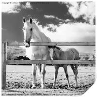 Mare and foal behind fence, Print