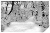 Central Park Dressed Up In White, Print