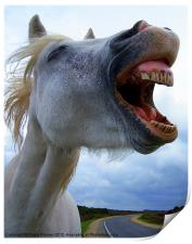 A laughing,white horse, Print