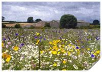 wildflower meadow 2, Print