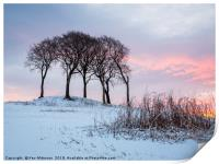 The Mellowing Freeze, Print