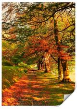 Autumn Woodland Walk, Print