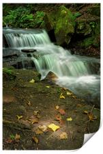 Glowing Beauty at Lumsdale                        , Print
