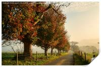 Autumn Morning Amble., Print