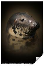 Portrait of a Seal, Print