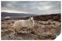 It's Cold on Them Moors., Print