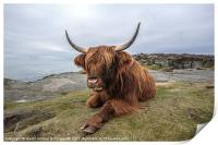 Highland Cow Chilling Out, Print