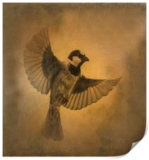 Flight of the Sparrow, Print