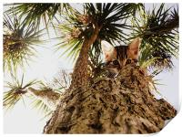 Kitty in a palm tree, Print