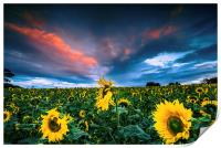 Sunflowers, Print