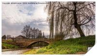 Weeping Willow, Print