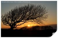 Sunset Silhoutte Tree, Print