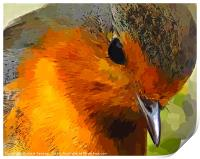 A beautiful close up view of a robin , Print